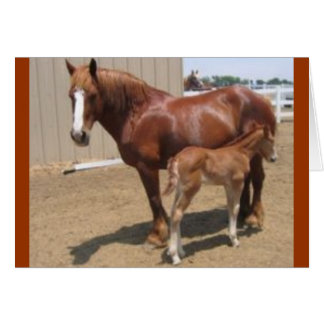 PMU mare & foal Card