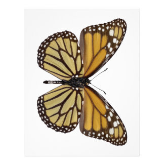 Png aislado de la mariposa de monarca membrete a diseño