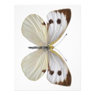 Png blanco grande aislado de la mariposa membrete personalizado
