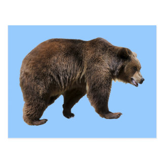 Png isolated brown bear postcard