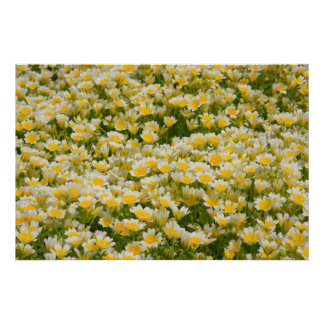 Poached Egg Plant Posters