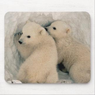 Poalr Bear Cubs Mouse Pad