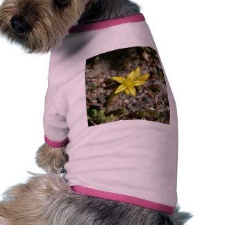Poca flor amarilla ropa de perros