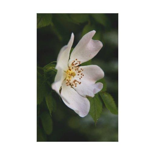 Poca flor blanca impresión en lienzo