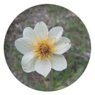 Poca flor blanca; Ningún texto Plato De Comida