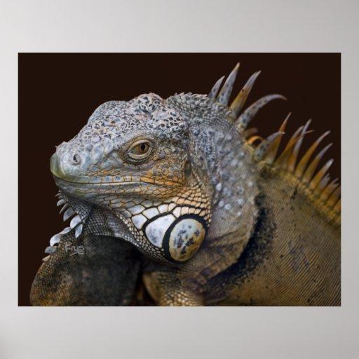 Poca impresión del dragón posters