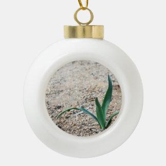 Poca planta adorno de cerámica en forma de bola