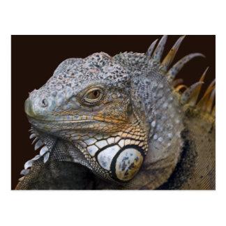 Poca postal del dragón