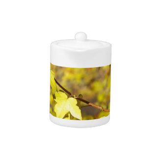 Poca rama del arce con pequeño amarillo sale del