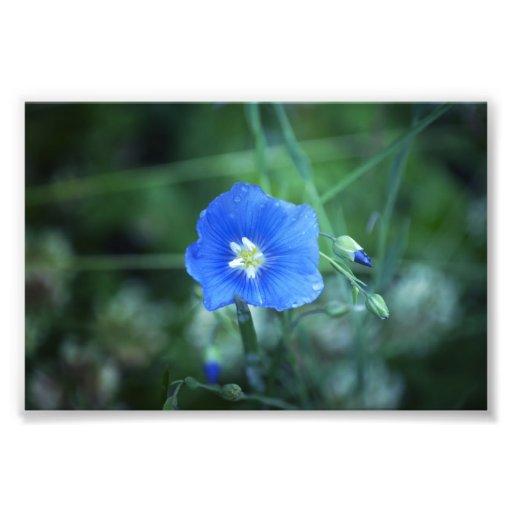 Poco azul de Flow'r Fotografía