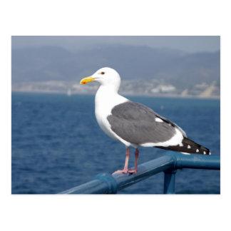 Poco Birdy Postales