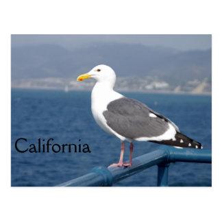 Poco Birdy Tarjeta Postal