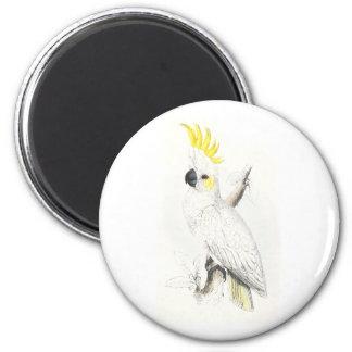 Poco Cockatoo Azufre-Con cresta de Edward Lear Imán Redondo 5 Cm