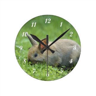Poco conejito gris reloj redondo mediano