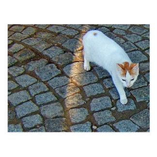 Poco gato de Ephesus del punto Tarjetas Postales