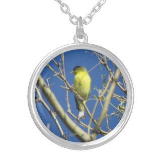 Poco Goldfinch Collares