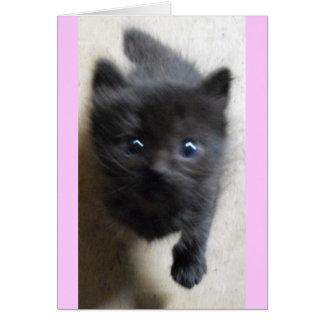 Poco negro de la Isla de Man con los ojos azules g Tarjeta De Felicitación