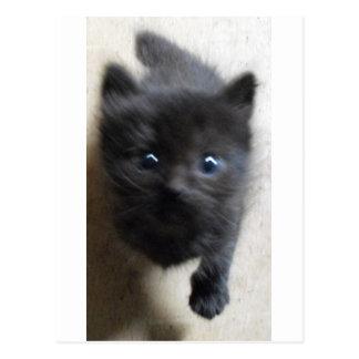 Poco negro de la Isla de Man con los ojos azules Postales