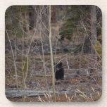 Poco oso en bosque grande posavaso