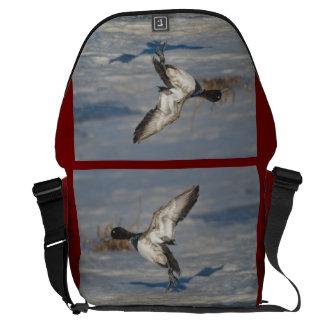 Poco pato de Scaup que toma vuelo del lago helado Bolsas Messenger