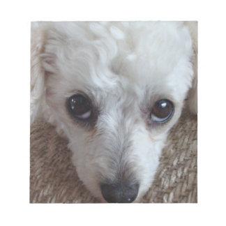 Poco perro de caniche blanco de la taza de té bloc de papel