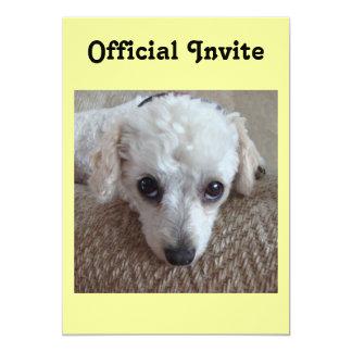 """Poco perro de caniche blanco de la taza de té invitación 5"""" x 7"""""""