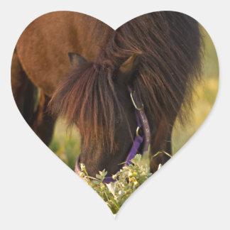 Poco potro de Sharni Shetland Pegatina En Forma De Corazón