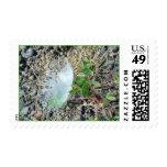 Poco sello de la pluma blanca 1
