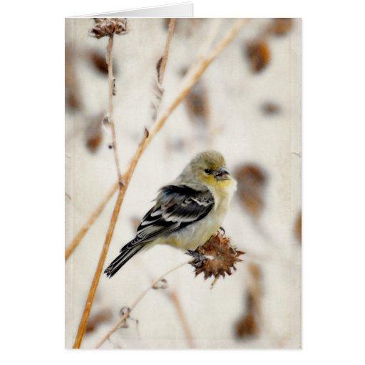 Poco sembrando - placer del Goldfinch Felicitación