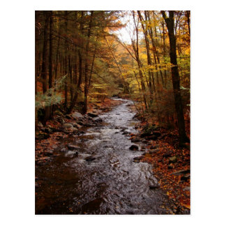 Pocono Stream in Autumn Postcard