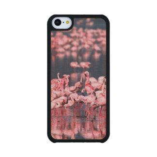 Pocos flamencos (menor) de Phoeniconaias, África, Funda De iPhone 5C Slim Arce
