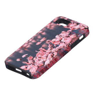 Pocos flamencos (menor) de Phoeniconaias, África, iPhone 5 Carcasas