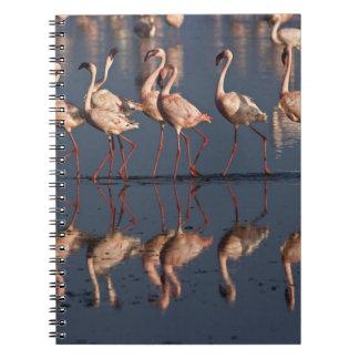 Pocos flamencos que exhiben, lago Nakuru Libro De Apuntes Con Espiral