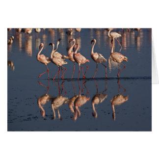 Pocos flamencos que exhiben, lago Nakuru Tarjeta De Felicitación