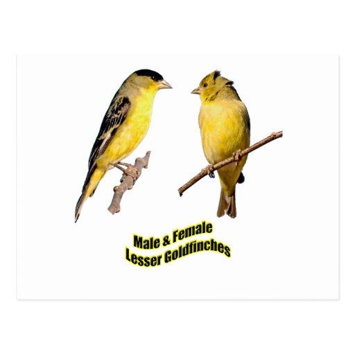 Pocos Goldfinches Postal