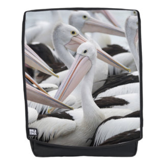 Pod of Pelicans Backpack