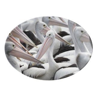 Pod of Pelicans Porcelain Serving Platter