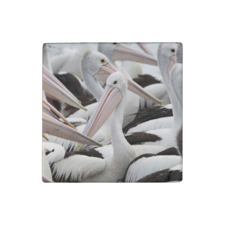 Pod of Pelicans Stone Magnet