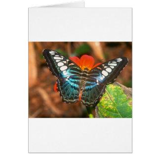 podadoras de las mariposas tarjeta de felicitación