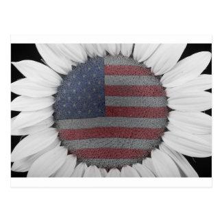 Poder americano del girasol tarjetas postales