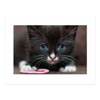 Poder del gatito tarjetas postales
