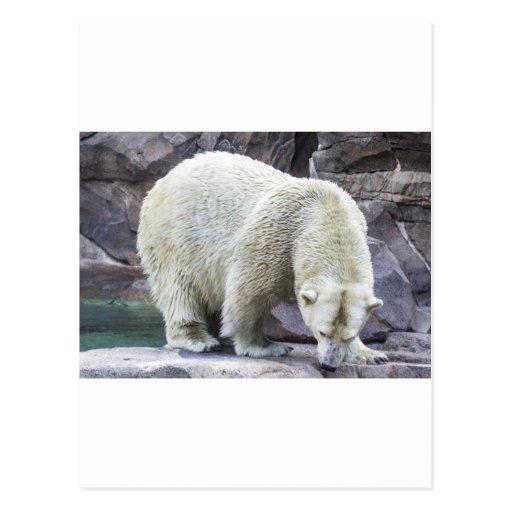 Poder polar tarjeta postal