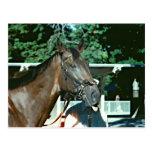 Poderoso renuncie la foto excelente 1977 del cabal tarjetas postales