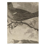 Poebird, New Zealand Postcard