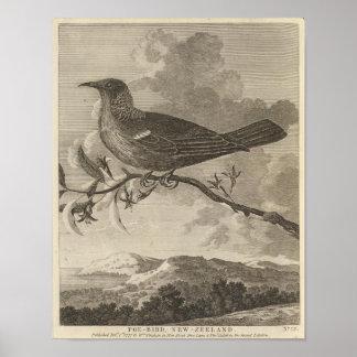 Poebird, New Zealand Poster
