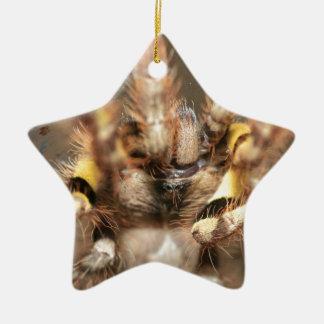 Poecilotheria striata Double-Sided star ceramic christmas ornament