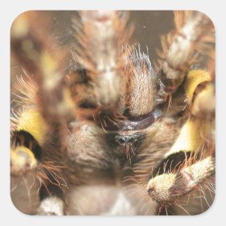 Poecilotheria striata square sticker