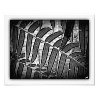 Poème Botanique Photo Print