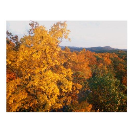 Poet Seat Tower Foliage View Postcard