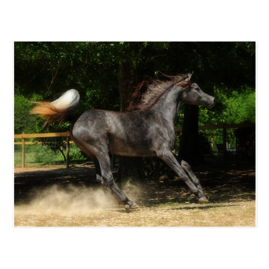 Poetry in motion postcard